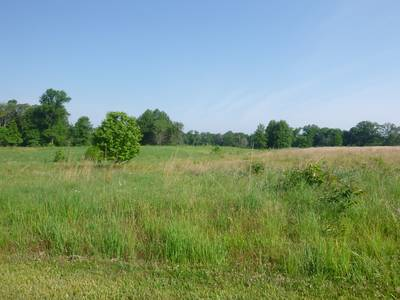 Grassy field at Iroquois Park